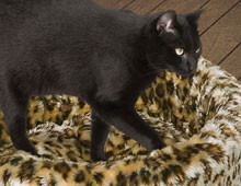 Cat Cosy