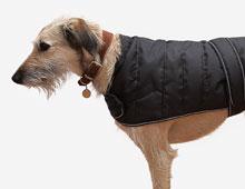 Harness Dog Coat