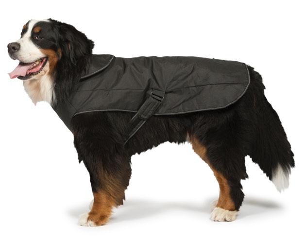 2-in-1 Harness Dog Coat